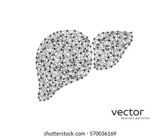 Abstract vector illustration of human liver on white background.