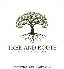 Abstract vibrant tree logo design, root vector - Tree of life logo design inspiration isolated on white background.