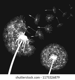 Abstract white dandelions, dandelion with flying seeds - stock vector
