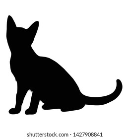 Abyssinian Silhoutte Design Illustration Vector