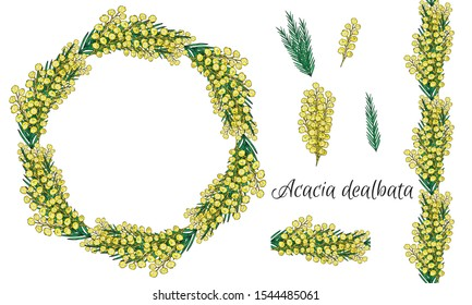Acacia dealbata, mimosa. Set of isolated elements from a white background. Yellow spring flowers. Wreath. Seamless pattern brush. Easter holiday decor set. Vector stock illustration. Botanica.