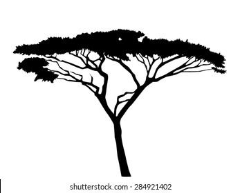 Acacia Tree Images Stock Photos Vectors Shutterstock