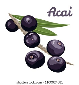 Acai berries. Vector illustration of  branch with berries and leaves isolated on white background. Flat style.