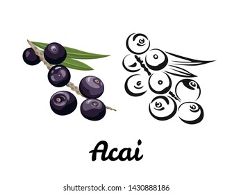 Acai icon set isolated on white background. Color illustration of ripe berry with a green leaf and black and white contour image. Vector outline and silhouette.