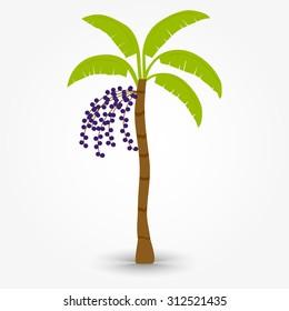 Acai tree. Brazilian tree named acai tree. Palm with bunch of acai fruit.