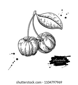 Acerola fruit vector drawing. Barbados cherry sketch. Vintage engraved illustration of superfood. Botanical branch. Hand drawn icon for label,  poster, packaging design.