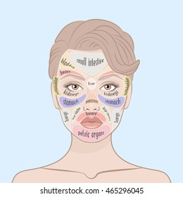 Acne Face Map. Vector illustration of beauty woman face. Viscera location map on the face. What your skin is telling you. Skin Mapping,