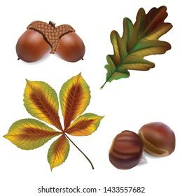 Acorn and oak leaves, chestnut and leaves. Autumn illustration set.