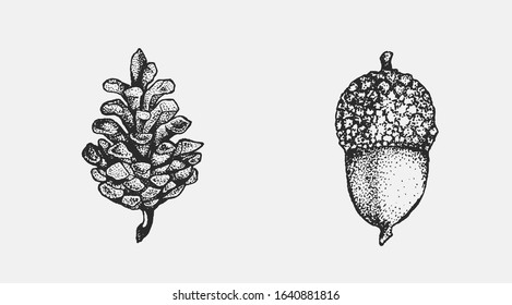 Acorn and pinecone hand drawn isolated illustration set. Tree seeds, foliage and forest plant elements for graphic design projects. Clip art for postcards, posters, invitations, floral compositions.