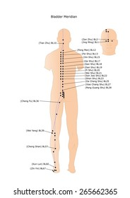 acupuncture: the bladder meridian and its main points