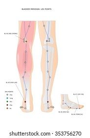 acupuncture: bladder meridian and its main points on the leg, with shu points (ancient points) highlighted