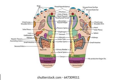 Acupuncture - Foot Scheme