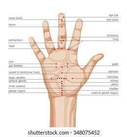 Acupuncture hand scheme. Vector illustration