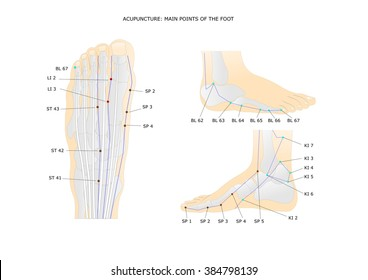 acupuncture: main points of the foot and ankle