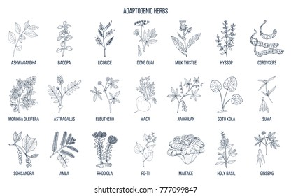 Adaptogen herbs. Hand drawn vector set of medicinal plants