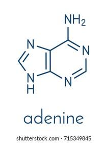 Adenine (A, Adenine) purine nucleobase molecule. Base present in DNA and RNA. Skeletal formula.