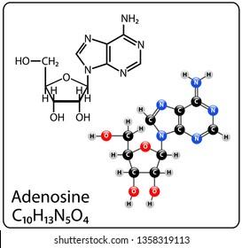 Adenosine Molecule Structure