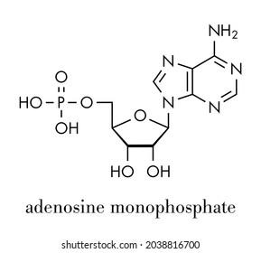 Adenosine monophosphate (AMP, adenylic acid) molecule. Nucleotide monomer of RNA. Composed of phosphate, ribose and adenine moieties. Skeletal formula.