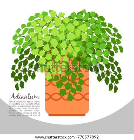 Adiantum Indoor Plant In Pot Banner Template Vector Illustration