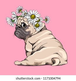 Adorable beige puppy Pug in a Chamomile flowers wreath on a pink background. Humor card, t-shirt composition, hand drawn style print. Vector illustration.