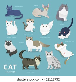 Adorable cat breeds collection in flat style