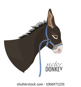 Adorable donkey head with black mane in blue harness