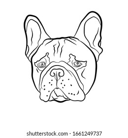 Adorable fawn French Bulldog head portrait. Breed standard. Logo web site kennel. Linear contour vector illustration.