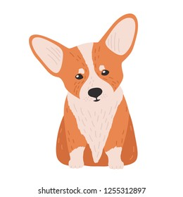 Adorable Pembroke welsh corgi. Small cute lovely dog or puppy of herding breed isolated on white background. Funny purebred pet animal. Bright colored vector illustration in flat cartoon style.