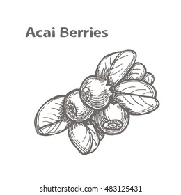 Adorable and unique hand drawn logo or card of acai berries. Vector illustration. Healthy food, superfood. Logotype, poster, banner, background, element, icon, package. 100% natural organic superfood.