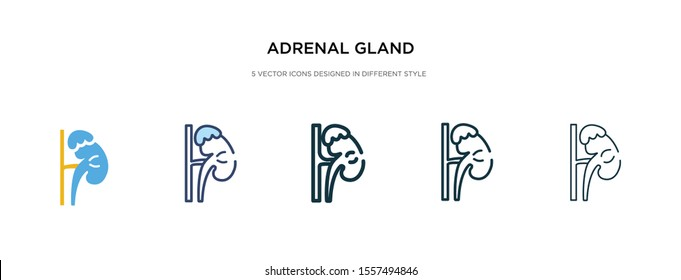 adrenal gland icon in different style vector illustration. two colored and black adrenal gland vector icons designed in filled, outline, line and stroke style can be used for web, mobile, ui