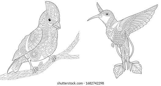 Adult coloring book. Bird set with northern red cardinal and hummingbird. Line art design for antistress colouring pages in zentangle style. Vector illustration.