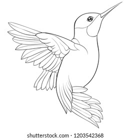 Adult coloring book page.  A cute hummingbird on the brunch image for relaxing.Zen art style illustration for print.