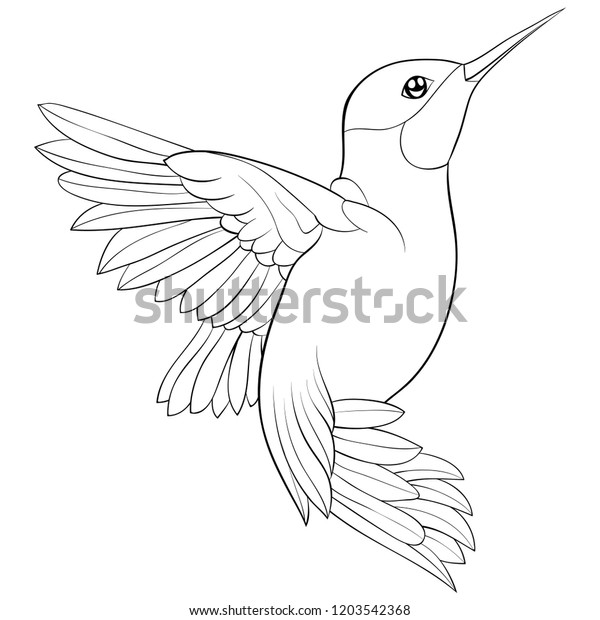 Adult Coloring Book Page Cute Hummingbird Stock Vector