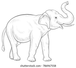 Adult coloring book,page a cute big elephant for relaxing. Line art style illustration.