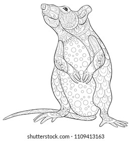 Adult coloring book,page a cute isolated rat for relaxing.Zen art style illustration.