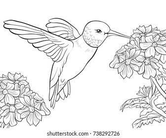 Hummingbird+coloring+page Stock Vectors, Images & Vector Art ...