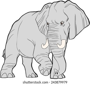Adult elephant (African) walking in a 3/4 view, looking back, vector file.