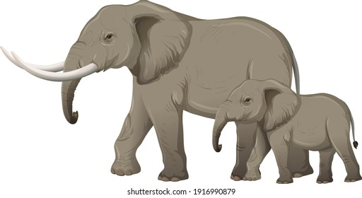 Adult elephant with young elephant in cartoon style on white background illustration