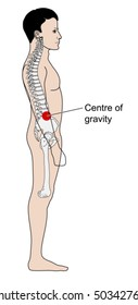 Adult male centre of gravity