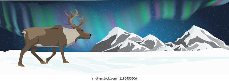 An adult reindeer walks through a snow-covered plain. Northern lights in the night starry sky. Animals of Russia, Canada, USA, Scandinavia and Iceland. Northern landscape
