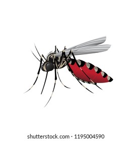 Aedes Mosquito, Vector Illustration