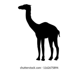 Aepycamelus prehistoric camel silhouette extinct mammal animal