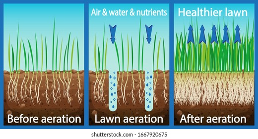 Aeration of the lawn. Enrichment with oxygen water and nutrients to improve lawn growth. Before and after aeration: gardening, lawn care services. Advantages, aeration. Vector