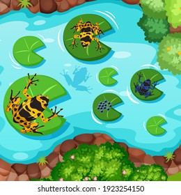 Aerial scene with exotic frogs and lotus leaves in the pond illustration