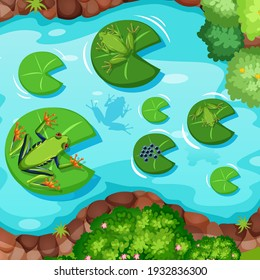 Aerial scene with frogs and lotus leaves in the pond illustration