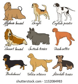 Afghan hound, airedale terrier, basset hound, beagle, dachshund, english pointer, golden retriever, irish setter, scottish terrier vector dog breed set. FCI hound, terrier, beagle and related breeds.