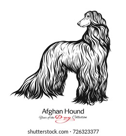 Afghan Hound. Black and white graphic drawing of a dog.