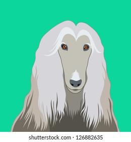 Afghan hound, The buddy dog