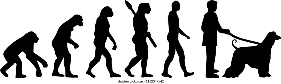 Afghan Hound evolution development with silhouette