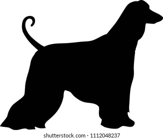 Afghan Hound silhouette real in black